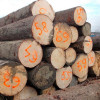 pine log wood /pine wood timber/pine sawn timber (FOR EXPORT TO CANADA AND AMERICA)