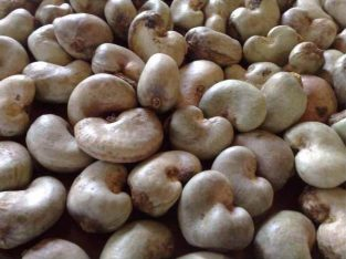 RAW CASHEW NUT (EXPORT TO CANADA AND AMERICA)