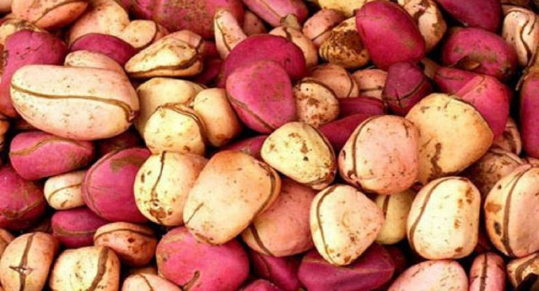 kola-nut for export (FOR EXPORT TO CANADA AND AMERICA)